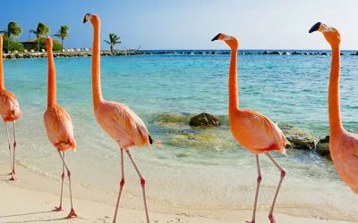 El Caribe desde Miami: Curacao, Aruba y República Dominicana, 10 días en Norwegian Pearl