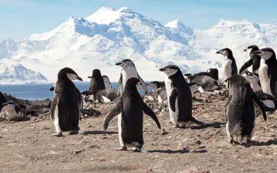 Antártida desde Buenos Aires, 13 días